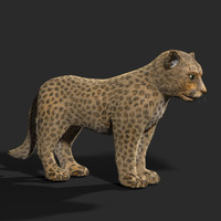 mountain cat 3d model
