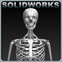 solidworks skeleton 3d model