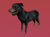 bauceron dog 3d model