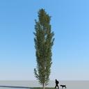 poplar leaves 3D models