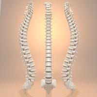 3d model human spine