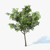 ficus tree 3d model
