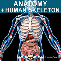 Skeleton & Anatomy