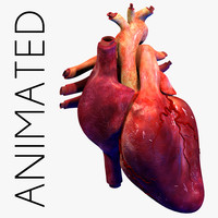 3d human heart animation