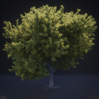 3d tree french pine needles