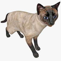 3d siamese cat pose 3 model