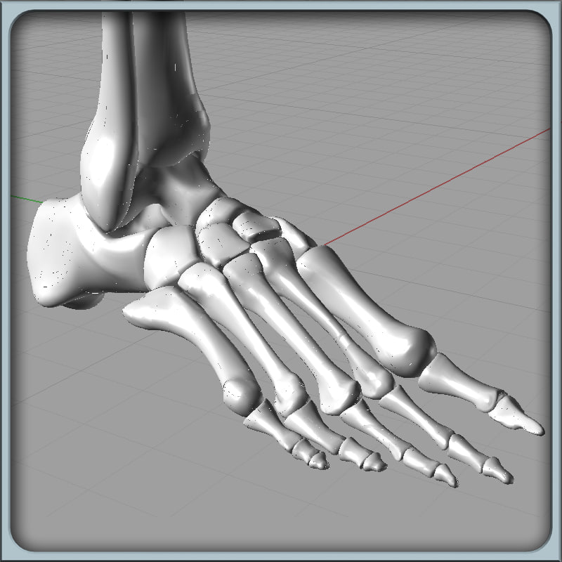 igs_Foot_Bones_Render_01.jpg