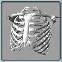 3dm igs ribcage