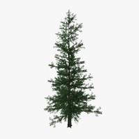 pine tree02 3d model