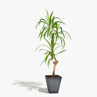 3d model of dracaena plant flower