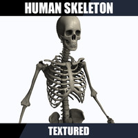 human male skeleton 3d obj