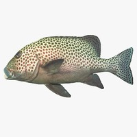 sweetlips 3d 3ds