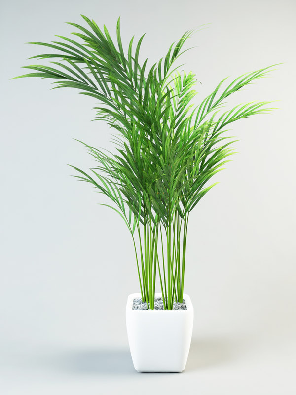 palm_in_small_pot_1.jpg