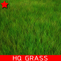 High Quality Grass