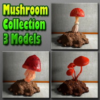 Mushroom Collection 3 Mushrooms