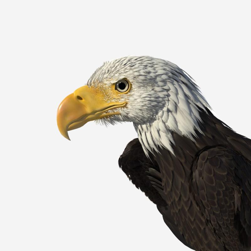 eagleR2_0011.png