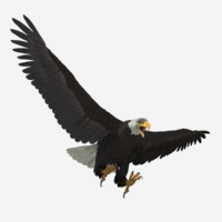 realistic bald eagle ma