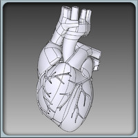 Human Heart Solidworks