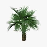 3d model palm tree04