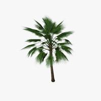 3d palm tree01 model