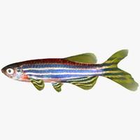 zebrafish danio rerio 3d obj