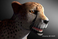 cheetah cat feline 3d obj