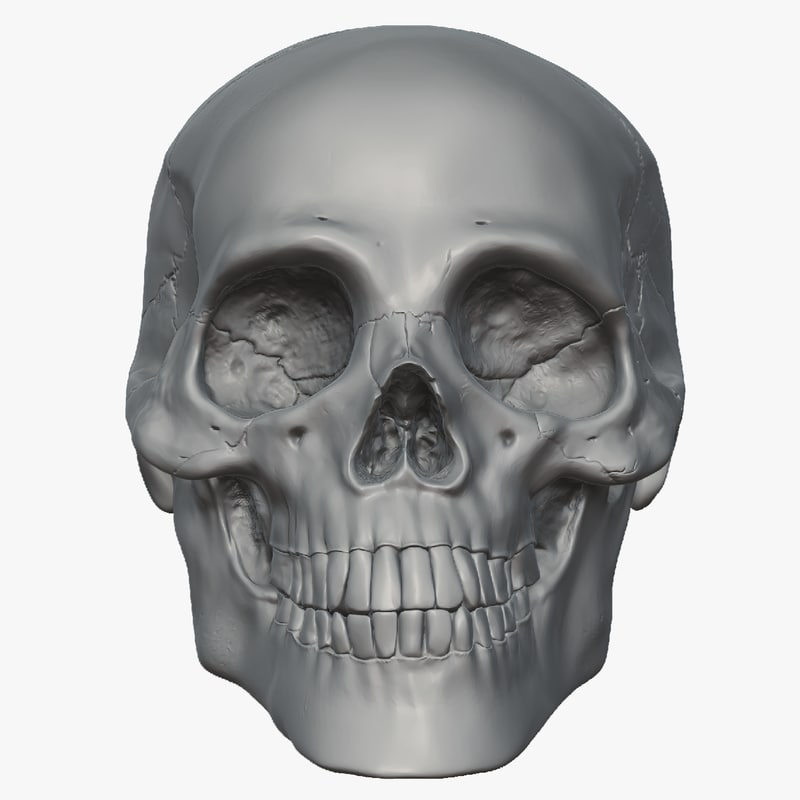 skull_front_clean.png