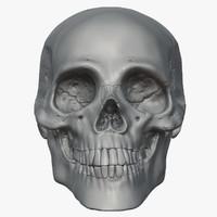 3ds max human skull