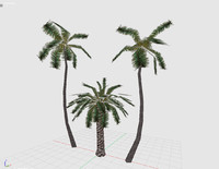 3d model of palms render