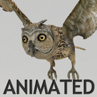 Owl Animated