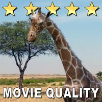 movie giraffe 3d obj