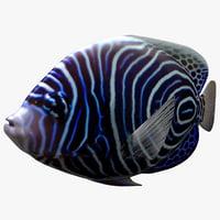 maya emperor anglefish