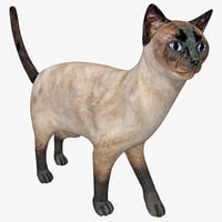 siamese cat pose 5 3d max