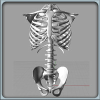 igs torso skeleton 3d 3dm