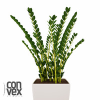 potted plants 08 3d model