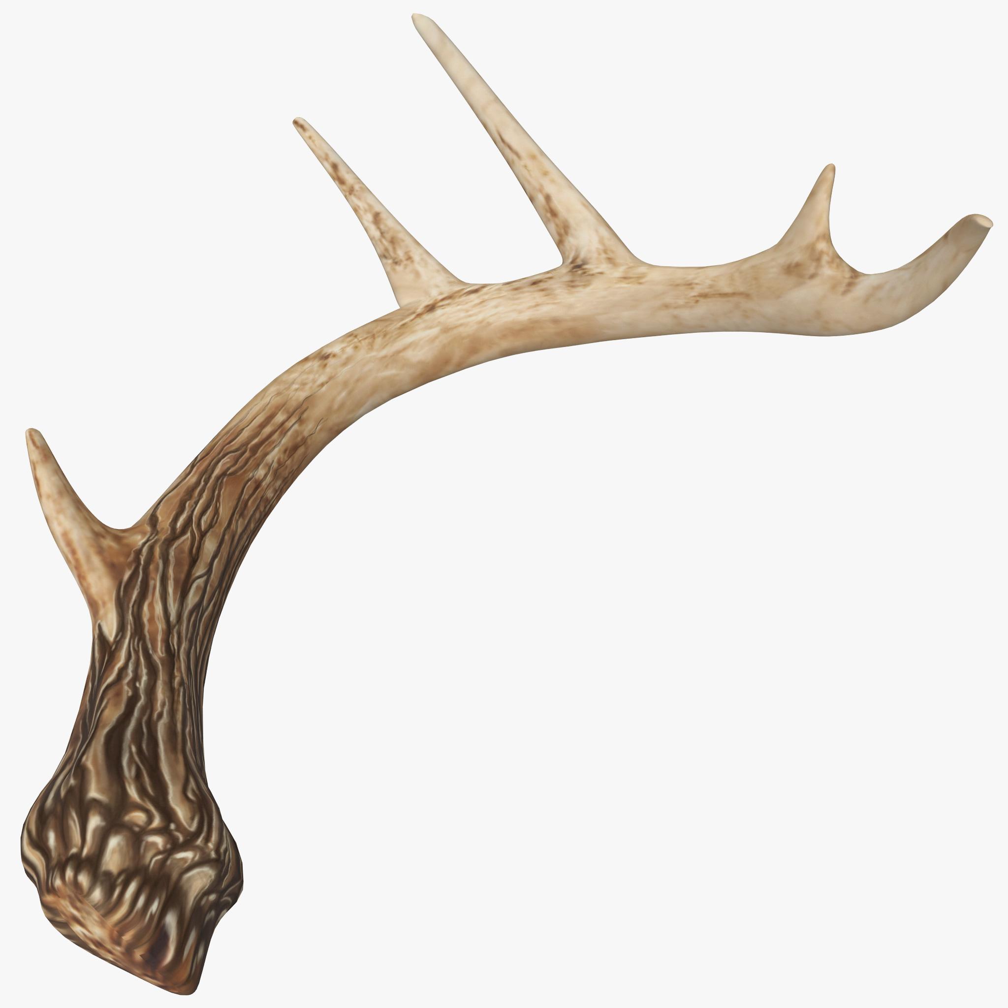 Deer Antler_1.jpg