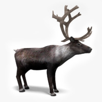 3dmax reindeer deer