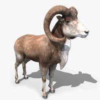 3d goat rigged model