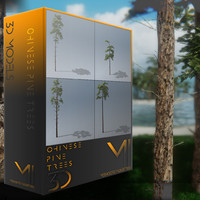 chinese pine tree 3d model