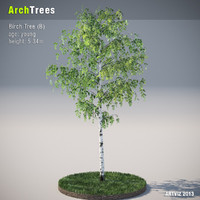 ArchTrees Birch Tree (B)
