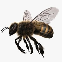 3d model honey bee rigged animating