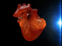3ds max human heart