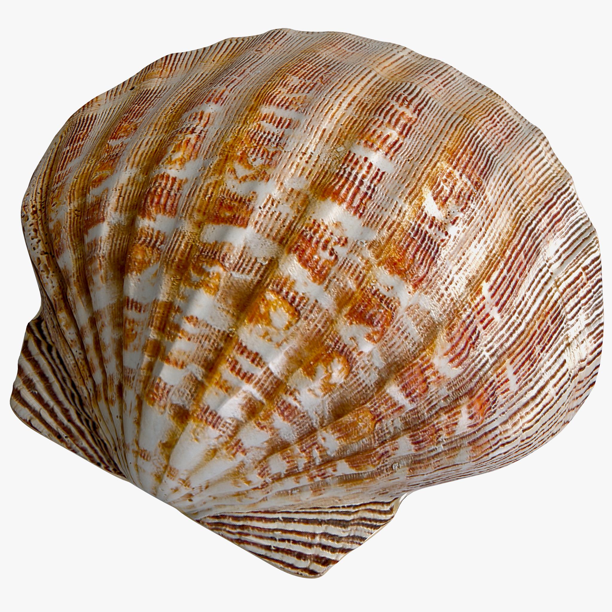 Clam Seashell 2_155.jpg
