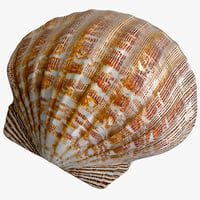 clam seashell 2 3d max