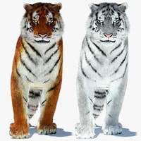 3d tigers amur white