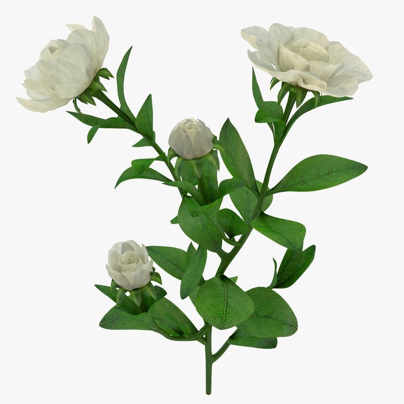 Gardenia_Branch_000.jpg