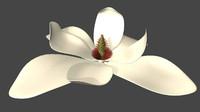 magnolia flowering ma