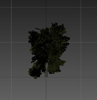 3d model tree resolution gameready
