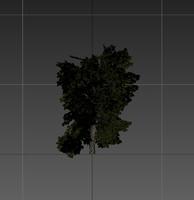 3d model tree resolution gameready