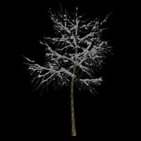 3d max tree 1 branches snow